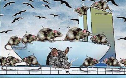 charge bessinha ratos em brasilia
